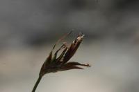 Photographie n°bb022493 du taxon