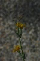 Photographie n°bb022701 du taxon