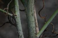 Photographie n°bb022703 du taxon