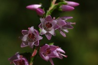 Photographie n°bb022833 du taxon