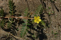 Photographie n°bb022894 du taxon