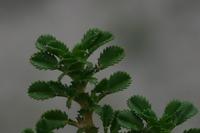 Photographie n°bb023886 du taxon