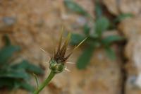 Photographie n°bb024514 du taxon