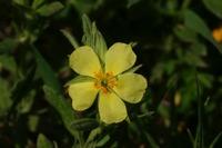 Photographie n°bb025154 du taxon