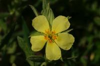 Photographie n°bb025155 du taxon