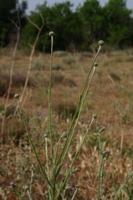 Photographie n°bb025465 du taxon
