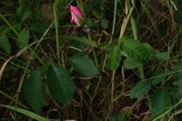 Photographie n°bb026301 du taxon