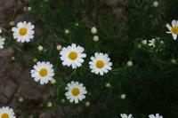 Photographie n°bb026635 du taxon