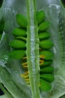 Photographie n°bb026742 du taxon