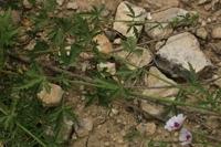 Photographie n°bb027637 du taxon