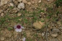 Photographie n°bb027638 du taxon