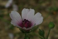 Photographie n°bb027639 du taxon