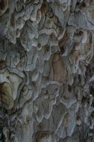 Photographie n°bb027744 du taxon