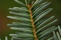 Photographie n°bb028107 du taxon