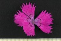 Photographie n°bb028128 du taxon