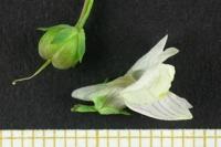 Photographie n°bb028146 du taxon