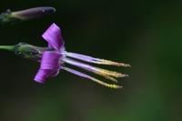 Photographie n°bb028156 du taxon