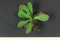 Photographie n°bb028384 du taxon