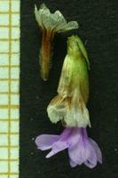 Photographie n°bb028386 du taxon