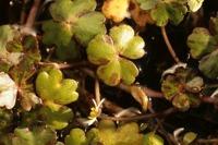 Photographie n°bb029355 du taxon