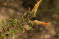 Photographie n°bb029864 du taxon
