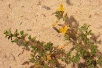 Photographie n°bb029867 du taxon
