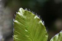 Photographie n°bb030988 du taxon