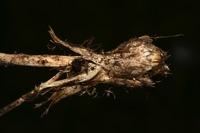 Photographie n°bb031850 du taxon