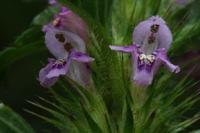 Photographie n°bb032196 du taxon