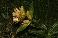 Photographie n°bb032543 du taxon