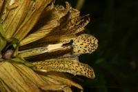 Photographie n°bb032545 du taxon