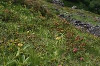 Photographie n°bb032654 du taxon