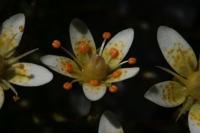 Photographie n°bb032828 du taxon