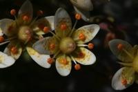 Photographie n°bb032829 du taxon