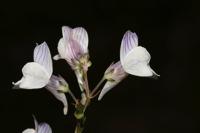 Photographie n°bb033431 du taxon