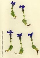 Photographie n°bb033737 du taxon
