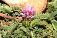 Photographie n°bb035954 du taxon