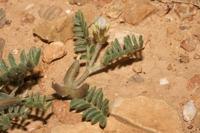 Photographie n°bb035977 du taxon