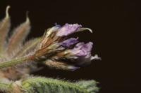 Photographie n°bb036005 du taxon
