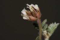 Photographie n°bb036026 du taxon