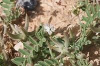 Photographie n°bb036036 du taxon