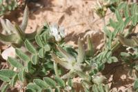 Photographie n°bb036037 du taxon
