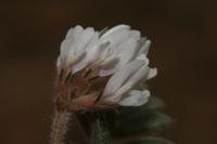 Photographie n°bb036149 du taxon
