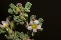 Photographie n°bb036158 du taxon