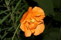 Photographie n°bb038925 du taxon