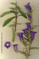 Photographie n°bb039488 du taxon
