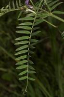 Photographie n°bb039534 du taxon