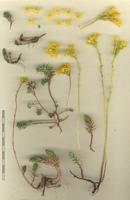Photographie n°bb040582 du taxon