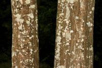 Photographie n°bb041001 du taxon