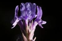 Photographie n°bb041768 du taxon